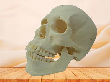 Esqueleto con Dientes